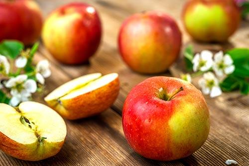 Hard Fruit